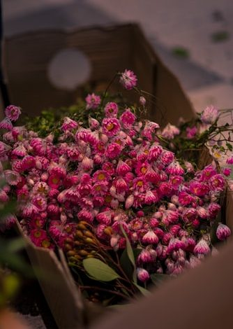 BEST FLOWERS TO MAKE YOUR BOUQUETS ATTRACTIVE