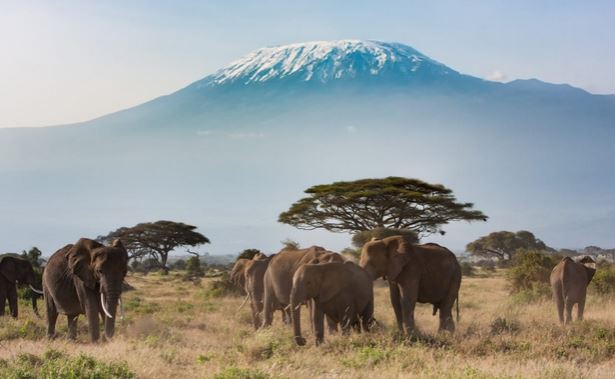 How to Invest in Africa the Smart Way