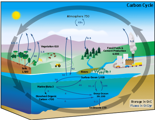 What Are Carbon Emissions?