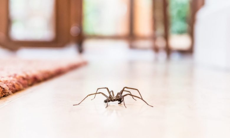 This Is How to Get Rid of Spiders in Your House