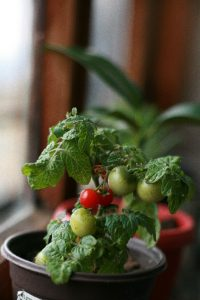 What Are Some Indoor Gardening Tips