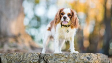 Irresistible dog breeds that you want to know before adopting your best friend